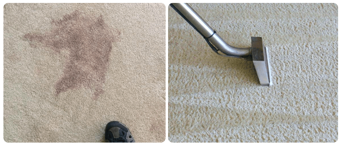 Professionals for carpet cleaning and stain removal services